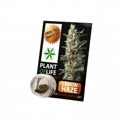 Résine CBD LEMON HAZE 3,8% 1G Plant of Life
