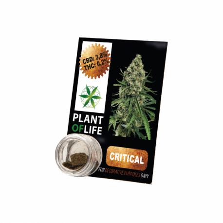 Résine CBD CRITICAL MASS 3,8% 1G Plant of Life